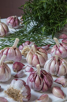 Fresh garlic bulbs, some peeled