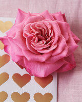 Pink rose on hart-patterned paper