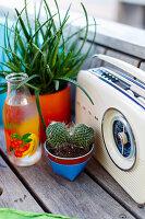 Radio, cactus, plants