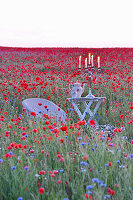 Seating area in field full of poppies and cornflowers
