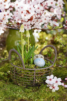 Easter eggs in nest made from basket planted with white grape hyacinths