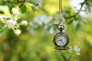 Pocket watch and apple blossom on apple tree