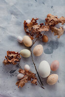 Eggs of various sizes and colours and dried oak twigs