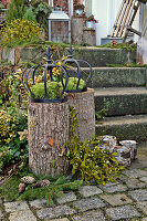 Moss and iron crowns on tree stumps, branch of mistletoe and candle lanterns next to steps