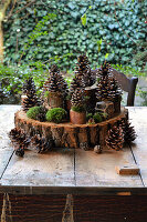 DIY decoration with Pinecones and moss on pieces of branch and a wooden disc