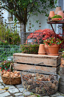 Autumnal arrangement of chrysanthemums, teaberry, candle lanterns and baskets of pine cones and walnuts