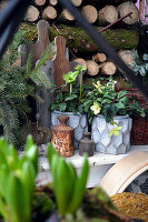 Potted hellebores in front of stacked firewood