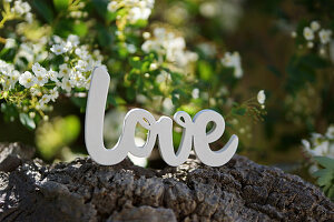 Lettering spelling 'Love' on tree bark