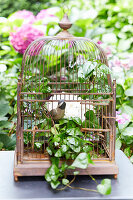 Bird ornaments in bird cage decorated with ivy