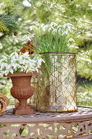Snowdrops in urn and glass vase on garden table