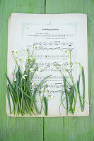 Snowdrops on sheet music