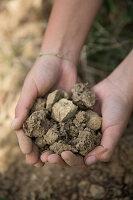 Hand holding a soil sample