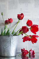 Bouquet of wilting tulips in zinc bucket