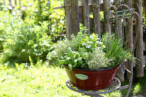Various kitchen herbs planted in vintage tub on garden chair