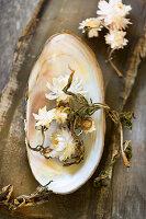 Strohblumen-Blüten in Süßwasser-Muschelschale