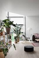 Zimmerpflanzen im modernen Wohnzimmer mit Eckfenster