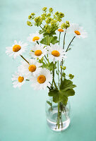 Posy of ox-eye daisies and lady's mantle