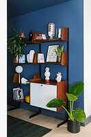 Alocasia next to mid-century shelves against blue wall