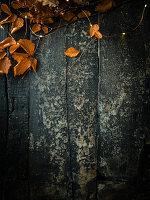 Autumn leaves on dark wooden surface