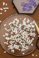 Filling glass frames with pressed spring flowers