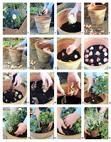 Instructions for planting containers with bulbs, hellebore, Japanese andromeda and skimmia