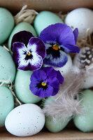 Ostereier mit Hornveilchen-Blüten und Federn