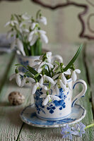 Snowdrops in blue-and-white cup