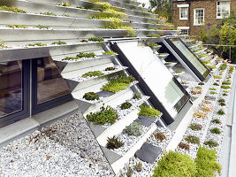 Planted trays of green roof and skylight windows