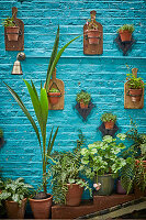 Various potted plants on table and on brick wall