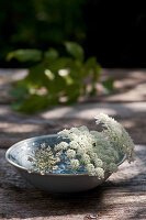 Queen Anne's lace in dish