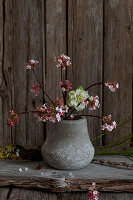 Branches of Bodnant viburnum in small vase against rustic wooden wall