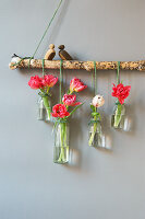 Arrangement of tulips in glass bottles hung from branch against wall