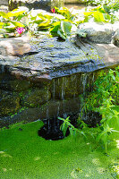 Small waterfall in pond with water lilies and duckweed