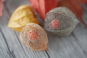 Dried physalis seed pods with berries visible inside