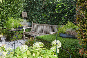 A seating area in a garden with a bench in front of an ivy-covered wall