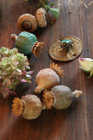 Dried poppy seed heads, hydrangea, acorn cups and green rose chafer