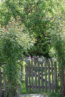 Weathered garden gate leading to herb garden