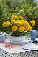 Flower arrangement of yellow ranunculus in a white soup bowl