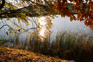 Fish pond in autumn