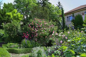 Mediterranean garden with blooming roses