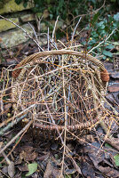 Basket with branches: Cornelian cherry Dogwood