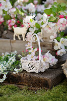 Basket with apple blossoms and white forget-me-nots