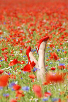 Woman's legs with red high heels on feet emerging from field of poppies and cornflowers