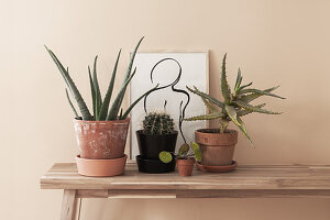 Houseplants and handmade framed drawing on wooden bench