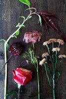 Flowers for autumn bouquet