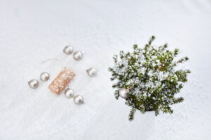 Christmas arrangement with silver baubles, dwarf Alberta spruce and artificial snow