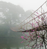 Footbridge Suspended Over a Foggy River,Lao Cai, Vietnam