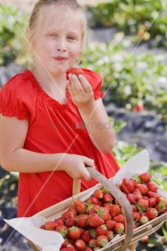 Mädchen nascht Erdbeere im Garten