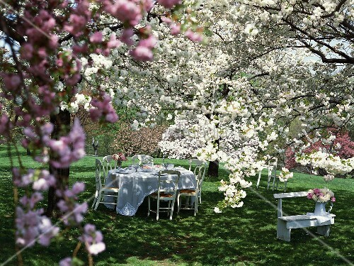 Laid table under blossoming trees in garden