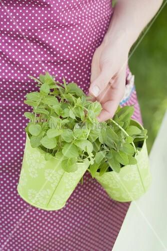 Frau trägt frische Gartenkräuter